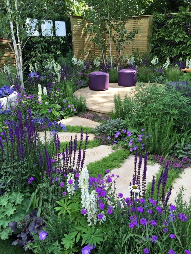 Квітучі свічки для вашого саду: сорти лиатриса і тонкощі догляду за многолетником
