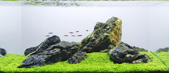 Оформлення акваріума своїми руками: акваскейпінг від азів до продуманої екосистемі